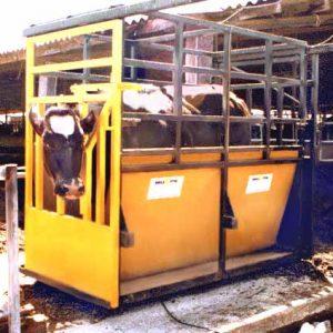 Livestock Weights